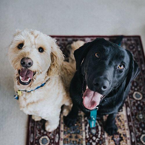 Leren-honden-riem-maken- (1)